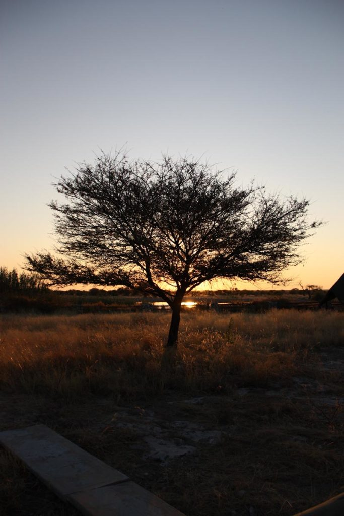 gallery-namibia (19)