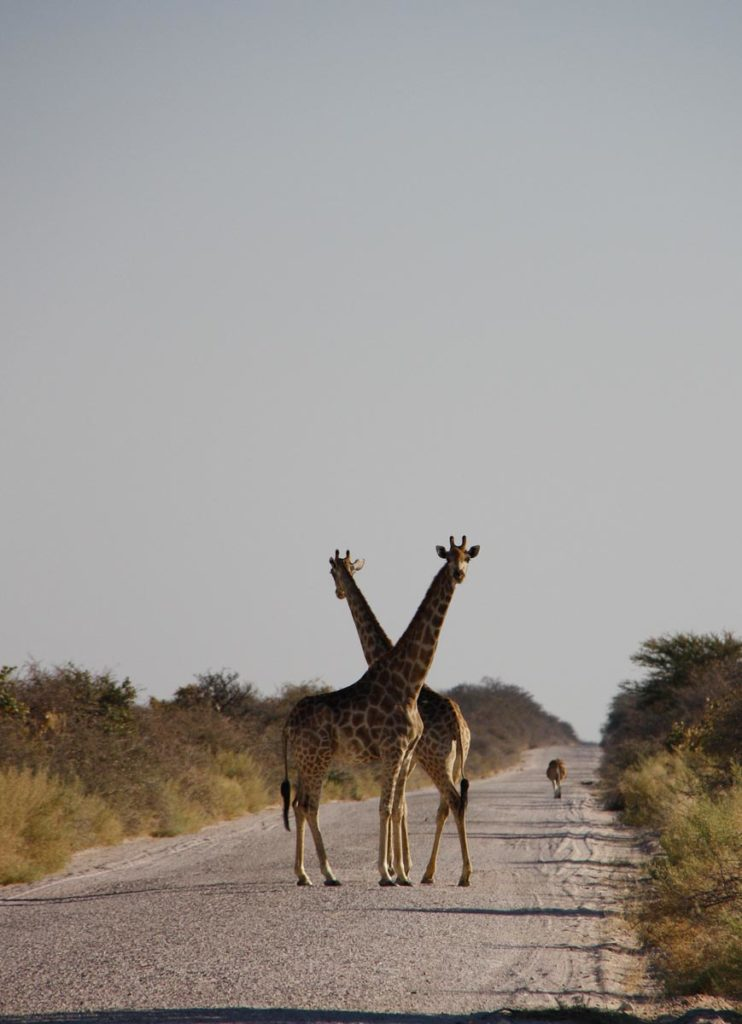 gallery-namibia (22)