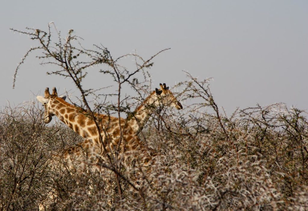 gallery-namibia (4)