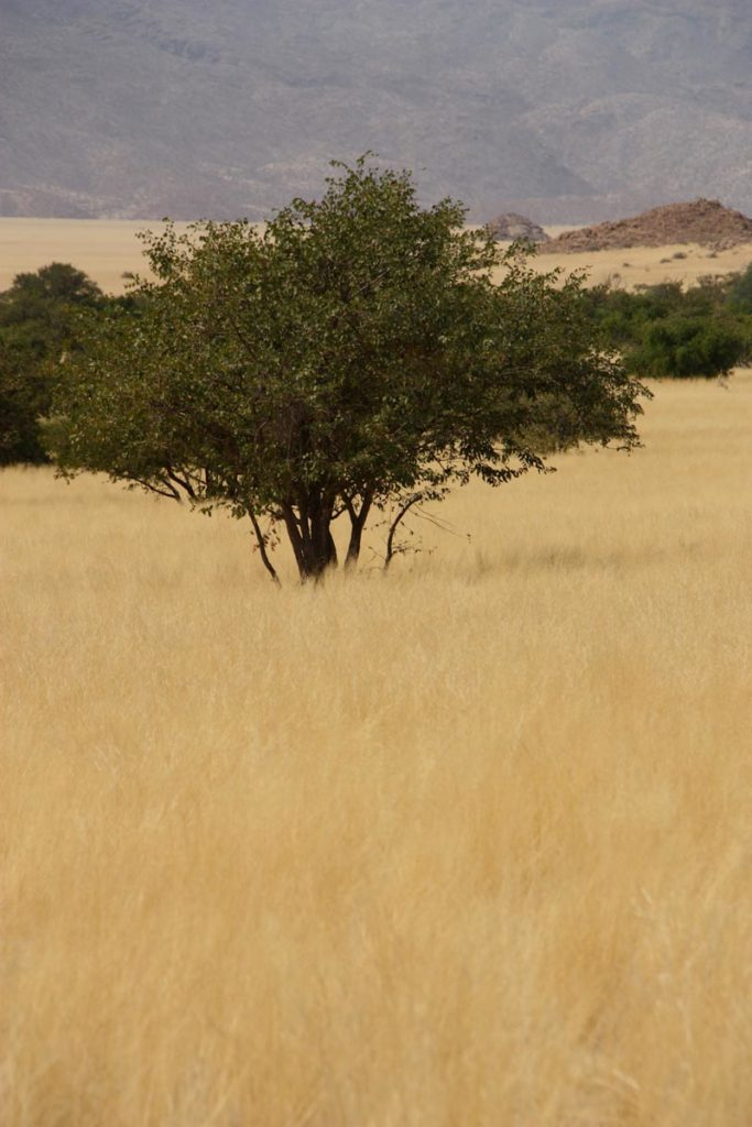 gallery-namibia (54)