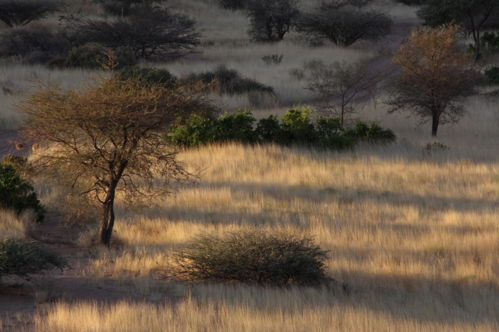 gallery-namibia (63)