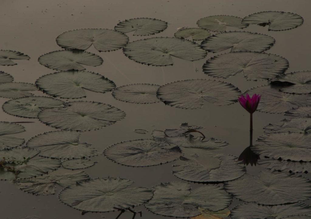gallery-cambogia (32)