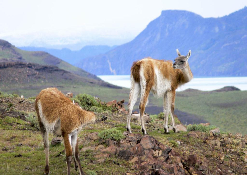 gallery-patagonia (16)